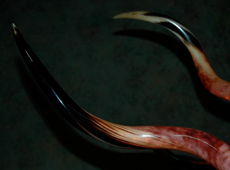 rustic-kudu-horn-chandeliers-7